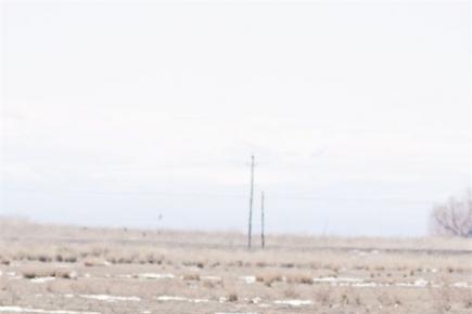 雁鹤飞舞鸭戏水——塔额盆地生态改善引来群鸟栖息