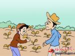 防治棉花病虫害