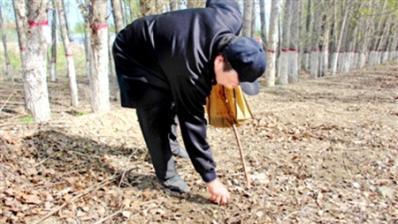 捡野蘑菇需谨慎