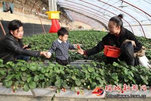 大棚草莓上市