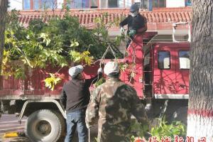 修剪树枝美化环境