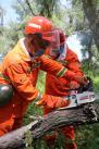 □护林员窦生青(左)和队友一起拉动手持式链锯,准备清理枯木。