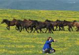 山花引来八方客——第十五届新疆塔城裕民山花节活动掠影